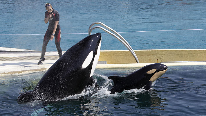 Francia prohíbe animales salvajes en circos ambulantes, y la reproducción y adquisición de nuevos ejemplares para delfinarios